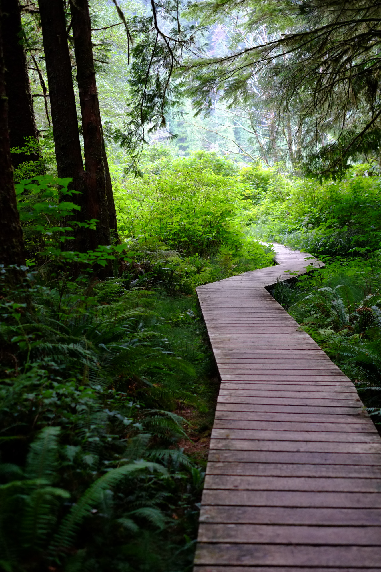 A wooden boardwalk through the forest to Eric Lake